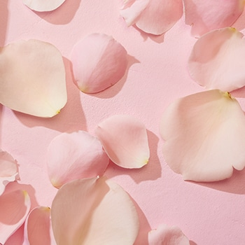 pink flower petals on pink background